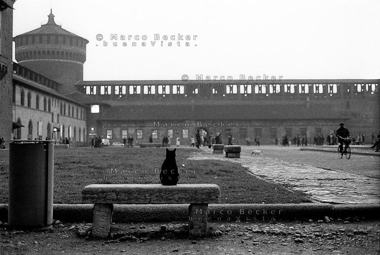milano, gatti al castello sforzesco --- milan, cats at sforza castle