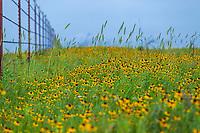Grasslands, Meadows, and Prairies