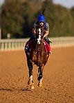 October 05 2018 : War of Will gallops at Keeneland Racecourse on October 05, 2018 in Lexington, Kentucky. Evers/ESW/CSM