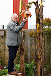 Foto: VidiPhoto<br /> <br /> ANDELST – Geert Wissing uit Andelst bij de bananenboom in zijn tuin. De boom is nu vier jaar oud en er groeien nu voor het eerst bananen aan. In de winter wordt de boom vorstvrij ingepakt.