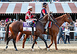 Tenfold in the post parade as Catholic Boy (no. 11) wins the Travers Stakes (Grade 1), Aug. 25, 2018 at the Saratoga Race Course, Saratoga Springs, NY.  Ridden by  Javier Castellano, and trained by Jonathan Thomas, Catholic Boy finished 4 lengths in front of Mendelssohn (No. 8).  (Bruce Dudek/Eclipse Sportswire)