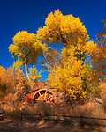 "Sedona Water Wheel, Crescent Moon Ranch.  One criticism that is sometimes leveled at landscape photographers is that their images can ""look like postcards"".  This is deemed undesirable, I guess, because postcard images are considered to be frivolously (or artificially) ""pretty"" and excessively colorful.  The intent of a postcard, presumably, is (among other things) to make the folks back home feel jealous because they couldn't be there in person.<br /> <br /> That's all well and good, I suppose.  But the ""problem"" we have in Sedona is that pretty much everything around here actually does look like a postcard, at least on a sunny day.  Now, among all of the problems that one might encounter in this world, I think most folks would agree that ours is one of the better ones to have.  But if a photographer is trying to create a reasonable approximation of how someone would experience a local scene…  well, what are ya gonna do?<br /> <br /> In my view, there's a simple solution to that quandary: just tell it like it is.  If someone doesn't like photos that look like they belong on a postcard, nobody is forcing them to look.  Such folks might not like what they would see in person around Sedona either.<br /> <br /> In that spirit, here's what the water wheel at Crescent Moon Ranch looked like yesterday (Nov. 7).  It was a glorious autumn afternoon with a deep blue and mostly cloudless sky, and the cottonwoods were showing off their peak fall color.  It just doesn't get much better around here.<br /> <br /> Image ©2019 James D. Peterson"