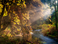 South Fork Silver Creek with fall color and sunlight. Silver Falls State Park, Oregon