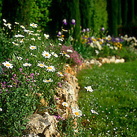 Close up of a flower bed in full bloom with daisies in the foreground and purple and yellow irises in the background