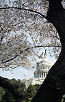 United States Capitol with spring cherry blossoms Washington DC,Washington DC, Politics in the United States, Presidential, Federal Republic, united States Congress, Fine Art Photography by Ron Bennett, Fine Art, Fine Art photo, Art Photography,