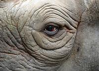 Auges des schwangeres Spitzmaulnashorn Sarafine (11) im Leipziger Zoo / eye of pregnant black rhinocerus / rhino in the Zoo of Leipzig .Foto: aif / Norman Rembarz..Jegliche kommerzielle wie redaktionelle Nutzung ist honorar- und mehrwertsteuerpflichtig! Persönlichkeitsrechte sind zu wahren. Es wird keine Haftung übernommen bei Verletzung von Rechten Dritter. Autoren-Nennung gem. §13 UrhGes. wird verlangt. Weitergabe an Dritte nur nach  vorheriger Absprache. Online-Nutzung ist separat kostenpflichtig..