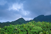 rainforest, Dominica, West Indies (Eastern Caribbean), Atlantic