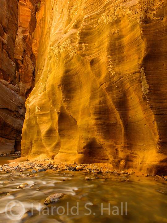 The absolute best hike one can do, bar none, in everybody's opinion, without exception, in all of Zion National Park Utah is the hike through the Virgin River up the Narrows, where the cool stream IS the trail for most of the way... when it is July and it is 110 degrees Fahrenheit in the rest of the park.....  You will NOT be alone on this hike.  My photo compositions were largely dictated to those scenes where there were not large groups or families walking through.  How can one possibly even begin to organize a hiking trip with 75 your screaming young girls in bikinis?  My Apple Health Tracker indicated my round trip hike was a little over 10 miles.  Even five miles up the river there were lots of people coming down river concluding an overnight hike through the Narrows on their one way trip down stream.