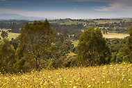 Image Ref: YV512<br />