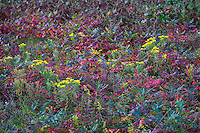 Autumn wildflower meadow, Martha's Vineyard, Massachusetts, USA