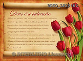 Alfredo, FLOWERS, BLUMEN, FLORES, paintings+++++,BRTOLP20465,#F# ,parchements,