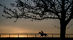 March 18, 2020 : A horse trains at sunrise as life goes on at Fair Hill Training Center in Fair Hill, Maryland. While no spectators are allowed at any race facility in the United States, or the world essentially, during the coronavirus pandemic, the horses still need to train and exercise. The Fair Hill Trainer Center in Cecil County in Maryland is still open for business and the equine athletes remain active through the COVID-19 crisis. Scott Serio/Eclipse Sportswire/CSM