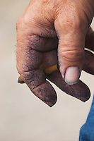The hand of a wiery worker stained blue from the grape must holding a French brown cigarette.  Chateau de Beaucastel, Domaines Perrin, Courthézon Courthezon Vaucluse France Europe