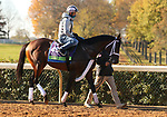 Factor This, trained by trainer Brad Cox, exercises in preparation for the Breeders' Cup Mile at Keeneland Racetrack in Lexington, Kentucky on November 4, 2020.