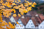 Europa, DEU, Deutschland, Hessen, Odenwald, Hirschhorn ( Neckar ) , Herbst, Blaetter, Herbstliche Faerbung., Kategorien und Themen, Natur, Umwelt, Landschaft, Jahreszeiten, Stimmungen, Landschaftsfotografie, Landschaften, Landschaftsphoto, Landschaftsphotographie, ....[Fuer die Nutzung gelten die jeweils gueltigen Allgemeinen Liefer-und Geschaeftsbedingungen. Nutzung nur gegen Verwendungsmeldung und Nachweis. Download der AGB unter http://www.image-box.com oder werden auf Anfrage zugesendet. Freigabe ist vorher erforderlich. Jede Nutzung des Fotos ist honorarpflichtig gemaess derzeit gueltiger MFM Liste - Kontakt, Uwe Schmid-Fotografie, Duisburg, Tel. (+49).2065.677997, fotofinder@image-box.com, www.image-box.com]