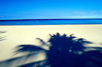 Palm trees shadows on Hapuna Beach