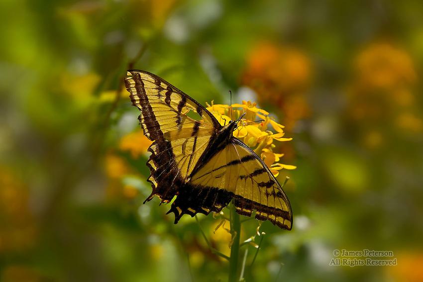Butterfly, West Fork of Oak Creek Canyon, Arizona