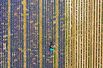 ONLINE ARE RESTRICTED TO A MAXIMUM OF 10 IMAGES  FROM THIS SET TO RUN ALONGSIDE THE STORY<br /> <br /> Pictured: Taken from by Drone:  Lavender harvest in Francia in the provence of Valensole.<br /> <br /> Amazing drone shots show a Mongolian tribesman sledding across a frozen lake, the skyscrapers of Dubai shrouded in mist and a fluorescent blue stream winding its way through the ice of Greenland.  Other images show fields of flowers in Italy and a herd of livestock being guided through the desert.<br /> <br /> The patterned pictures - which resemble modern art - were captured by photographer Alessandra Meniconzi from Lugano, Switzerland.  SEE OUR COPY FOR DETAILS.<br /> <br /> Please byline: Alessandra Meniconzi/Solent News<br /> <br /> © Alessandra Meniconzi/Solent News & Photo Agency<br /> UK +44 (0) 2380 458800