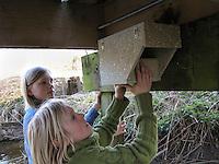 Kinder bringen Nistkasten für Gebirgsstelze, Bergstelze an einer Brücke über einen Bach an, Gebirgstelze,  Motacilla cinerea, Grey Wagtail, Bergeronnette des ruisseaux