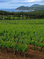 Weinanbau nördlich von Capoliveri, Elba, Region Toskana, Provinz Livorno, Italien, Europa<br /> winegrowing north of Capoliveri, Elba, Region Tuscany, Province Livorno, Italy, Europe