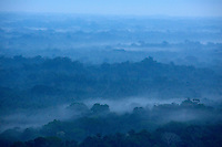 Morning clouds among the jungle canopy in Yasuni National Park.