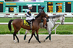 February 21, 2015: Quadrivium with Forest Boyce up in the Fairgrounds Handicap at the New Orleans Fairgrounds Risen Star Stakes Day. Steve Dalmado/ESW/CSM