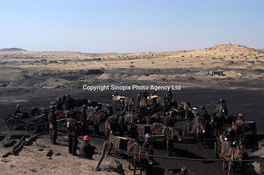 A team coal mining workers with mules stand outside the underground coal mine field in Wu Hai Xi, Inner Mongolia, China..