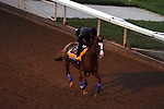November 4, 2020: Improbable, trained by trainer Bob Baffert, exercises in preparation for the Breeders' Cup Classic at Keeneland Racetrack in Lexington, Kentucky on November 4, 2020. John Voorhees/Eclipse Sportswire/Breeders Cup/CSM