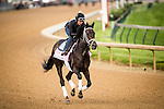LOUISVILLE, KY - MAY 04: Mo D' Amour gallops in preparation for the Kentucky Oaks at Churchill Downs on May 04, 2016 in Louisville, Kentucky.(Photo by Alex Evers/Eclipse Sportswire/Getty Images)