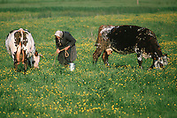 Europe/France/Pays de la Loire/85/Vendée/Env de Beauvoir-sur-Mer : Marais bretons vendéens - Paysanne et vaches<br /> PHOTO D'ARCHIVES // ARCHIVAL IMAGES<br /> FRANCE 1990