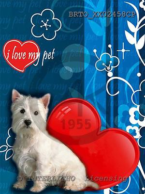 Alfredo, ANIMALS, dogs, photos+++++,BRTOXX02458CP,#a# Hunde, perros