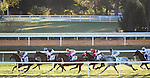 LEXINGTON, KY - OCT 08: Miss Temple City, #7, wins the Shadwell Turf Mile at Keeneland Racetrack in Lexington, KY. (Photo by Samantha Bussanich/Eclipse Sportswire/Getty Images)