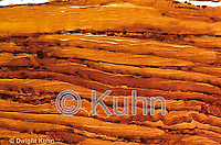 CZ07-010a  Skeletal Muscle - striated muscle, human  250x