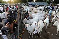 SOUTH SUDAN  Bahr al Ghazal region , Lakes State, town Rumbek, cattle market and auction /  SUED-SUDAN  Bahr el Ghazal region , Lakes State, Rumbek , Viehmarkt, Auktion und Handel mit Zeburindern