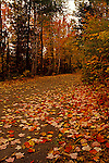 Winding country road, autumn, Renfrew County, Ontario fall colour