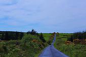 An Irish Country Lane