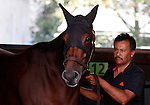 October 23, 2015:  Beholder schooling in the paddock, trained by Richard Mandella, and owned by B. Wayne Hughes, cross entered in the Breeder's Cup Classic Grade 1 $5,000,000, and the Breeder's Cup Distaff $2,000,000.  Candice Chavez/ESW/CSM