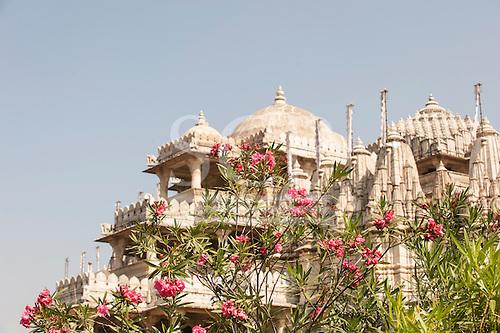 India; road from Udaipur to Jodhpur. Ranakpur Jain Temple and pink  Oleander flowers.