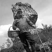 Europe/France/Auvergne/12/Aveyron/Roquefort-sur-Soulzon: Maurice Astruc maitre affineur des caves de roquefort cherche les champignonns bolets et oreillettes sur le Larzac [Non destiné à un usage publicitaire - Not intended for an advertising use]<br /> PHOTO D'ARCHIVES // ARCHIVAL IMAGES<br /> FRANCE 1990