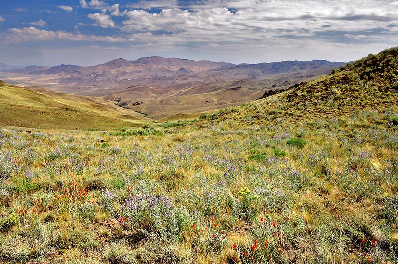 Landscape and wildflowers near Denio. Nevada