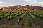 New Zealand, South Island, Marlborough Region, Renwick near Blenheim: Vineyards | Neuseeland, Suedinsel, Marlborough Region, Renwick bei Blenheim: Weinberge