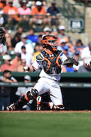 Baltimore Orioles catcher Caleb Joseph (36) during a Spring Training game against the Detroit Tigers on March 4, 2015 at Ed Smith Stadium in Sarasota, Florida.  Detroit defeated Baltimore 5-4.  (Mike Janes/Four Seam Images)
