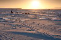 Rookie Michelle Phillips runs on the Unalakleet slough ice at sunrise just before Unalakleet in Arctic Alaska during the 2010 Iditarod