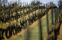 Europe/France/Pays de la Loire/49/Maine-et-Loire/Env de Denée: Le vignoble