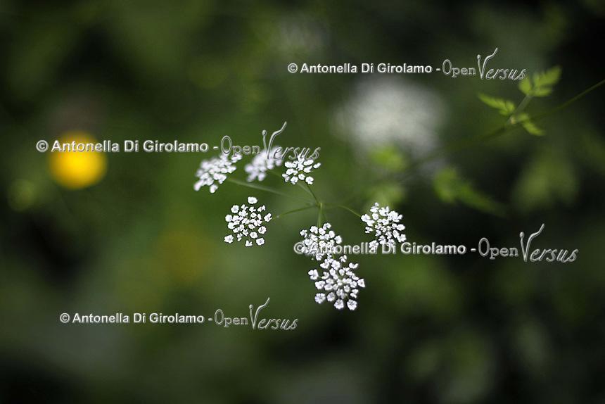 Riserva naturale del Turano. Turano Nature Reserve.