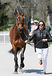 April 23, 2014: Cambalda and Jennie Brannigan during the first horse inspection at the Rolex Three Day Event in Lexington, KY at the Kentucky Horse Park.  Candice Chavez/ESW/CSM