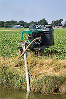 Farmers pump irrigating sugar beet from drainage dyke