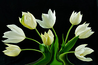 Tulip flower arrangment.