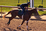 LOUISVILLE, KY - APRIL 20: Weep No More (Mineshaft x Crosswinds, by Storm Cat) stands on the track before exercising at Churchill Downs, Louisville KY. Owner Ashbrook Farm, trainer George R. Arnold II. (Photo by Mary M. Meek/Eclipse Sportswire/Getty Images)