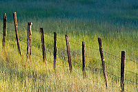 Fence line in tall grass pasture. Near Halfway. Oregon